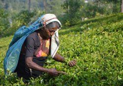 Professionelt arbejde udføres i haven og i boligen